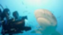 Sharkwater extinction.jpg