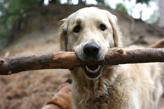 Brady found a stick
