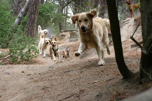 Run forest run,
