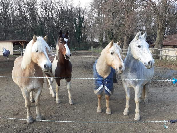 PferdeamZaun.jpg