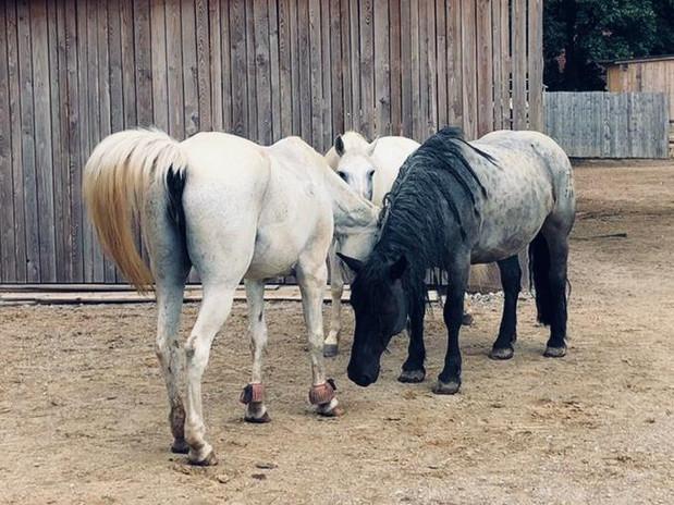 Pferdegruppe.jpg