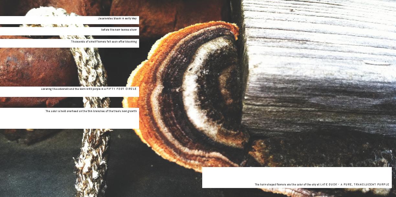 Holy Land-Kaukauna PDF_Page_09.png