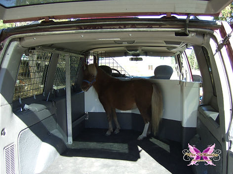 Custom Miniature Horse Hauler for Therapy Visits, Wee Whinnies Therapeutic Minis Literal Mini-Van! Vists to Nursing Homes, Alzheimer's Units,  Schools, Assisted Living Facilities with Miniature Horses. Therapy visits using Miniature Horses.