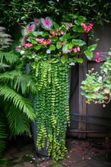 Planters & Containers 15