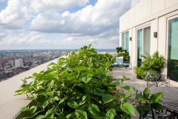 Rooftop 12