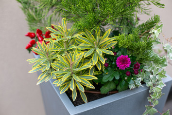 Planters & Containers 18