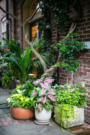 Planters & Containers 12