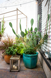 Planters & Containers 13