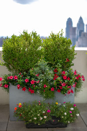 Planters & Containers 7