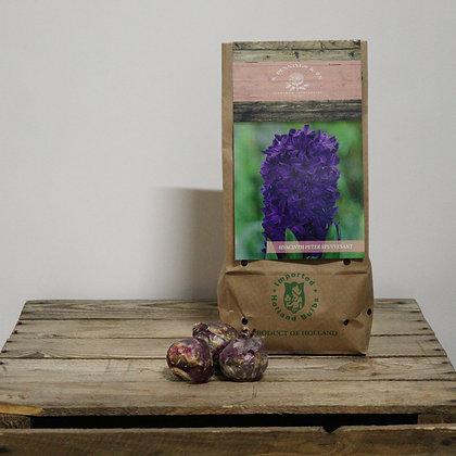 Peter Stuyvesant - hyacintenbollen