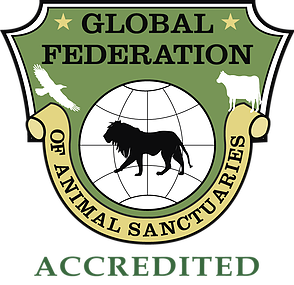 Safe Haven is proud to beGFAS Accredited