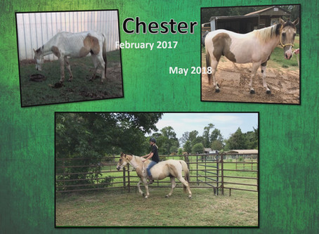 Chester - Available for Adoption