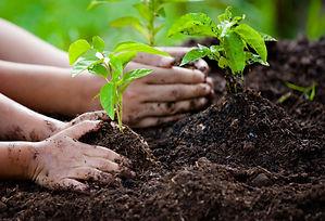 4 hands plant.jpg