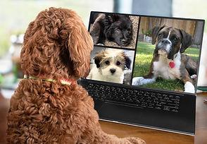 zoom dogs.jpg