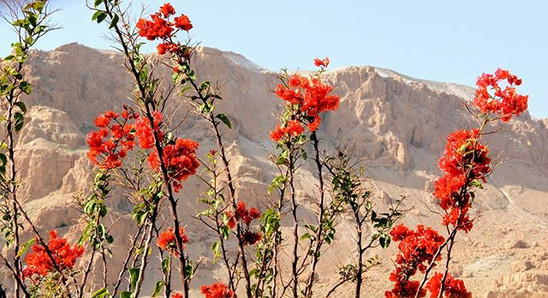 Fleur au désert