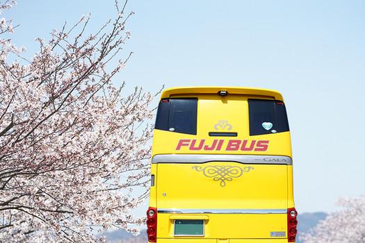 bus and sakura.jpg
