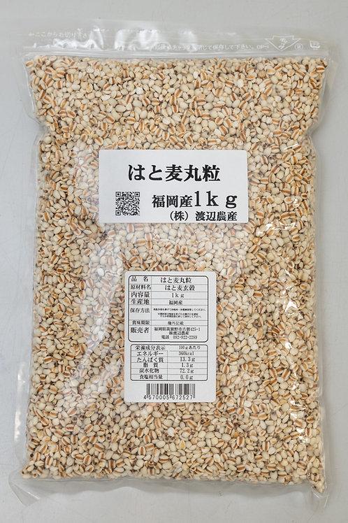 【福岡産】はと麦丸粒 1kg
