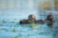 Sea_Otter_Buddies_WIX.jpg