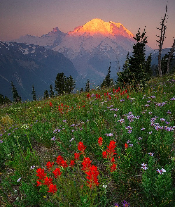 Wildflowers blossom in Sunrise in Mt. Rainier National Park. Photographed by Chase Dekker.