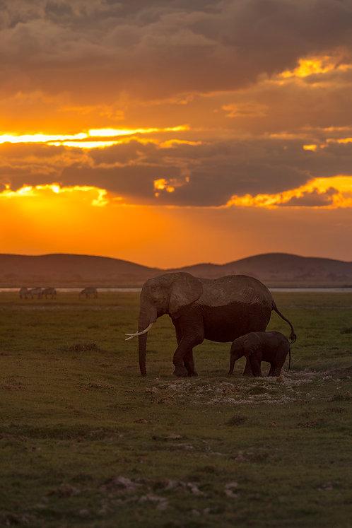 Amboseli Pair - Matted Print