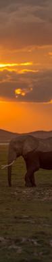 Amboseli Pair