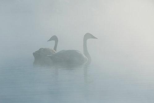 Mist Serpents