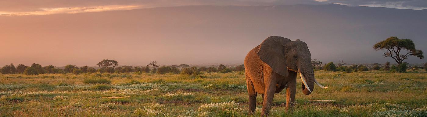The Awakening of Kilimanjaro