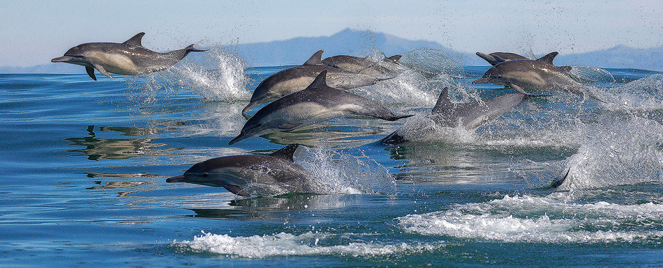 Dolphin Stampede