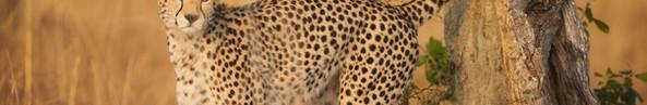 Duma of the Mara