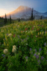 Rainier_Mazama_Ridge_Vertical_insta.jpg