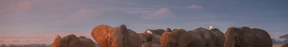 Tembo Sunrise