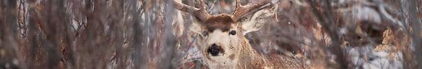 Hidden Buck