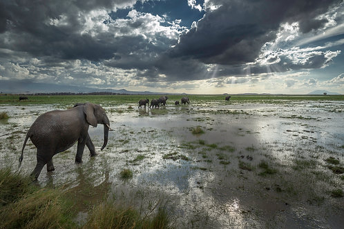 The Call of Amboseli
