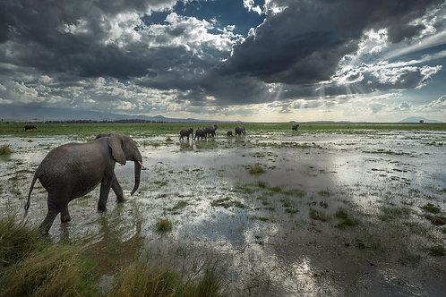 The Call of Amboseli - Matted Print