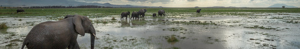 The Call of Amboseli