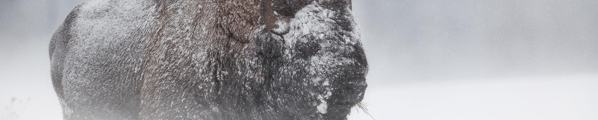 Titan of Winter