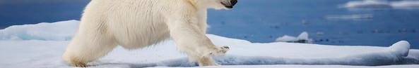 Polar Leap