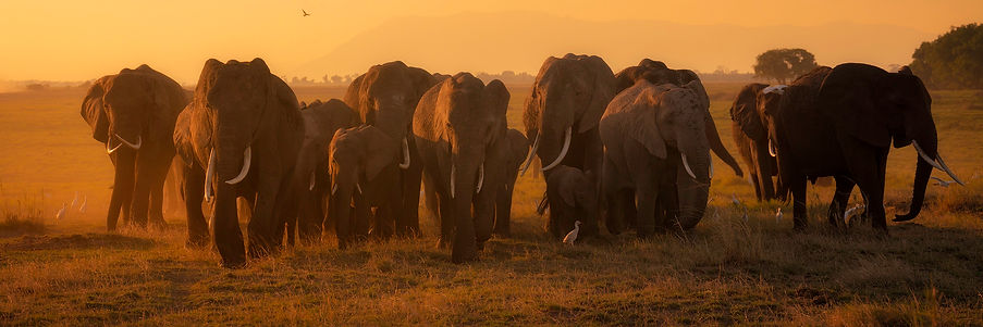 A herd of elephants walks towards the camera during Chase Dekker's Kenya workshop.