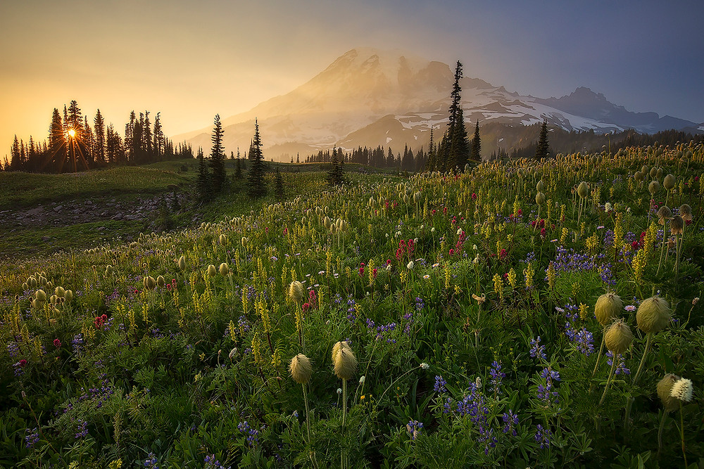 Mazama Ridge explodes with wildflowers beneath Mt. Rainier during sunset. Photographed by Chase Dekker.