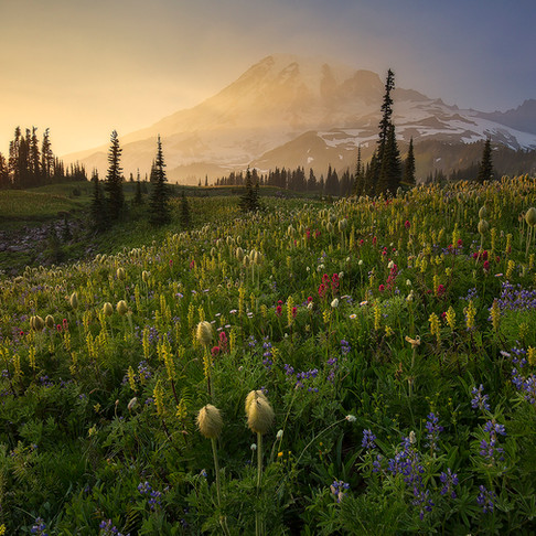 Mt. Rainier Wildflower Viewing Guide