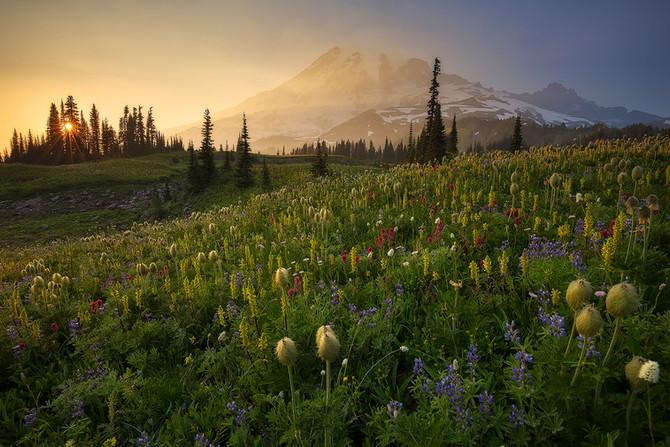 Mt. Rainier Wildflower Viewing Guide