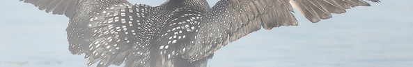 Foggy Feathers