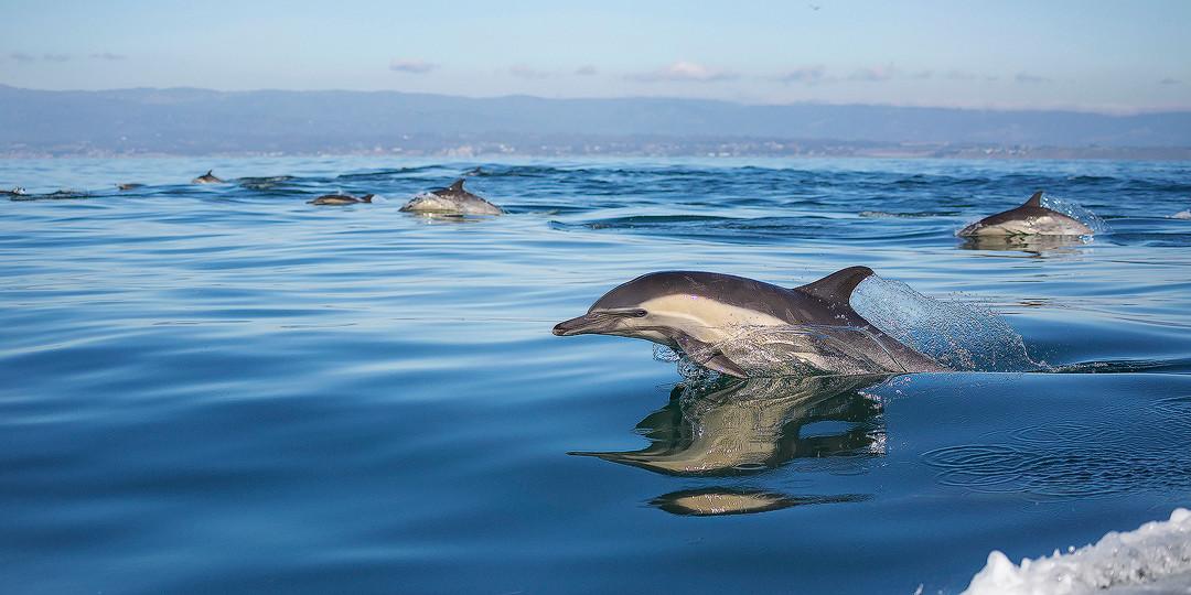 LB_Common_Dolphin_Pano_WIX.jpg