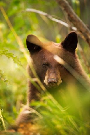 Black_Bear_Cub_Grass_insta.jpg