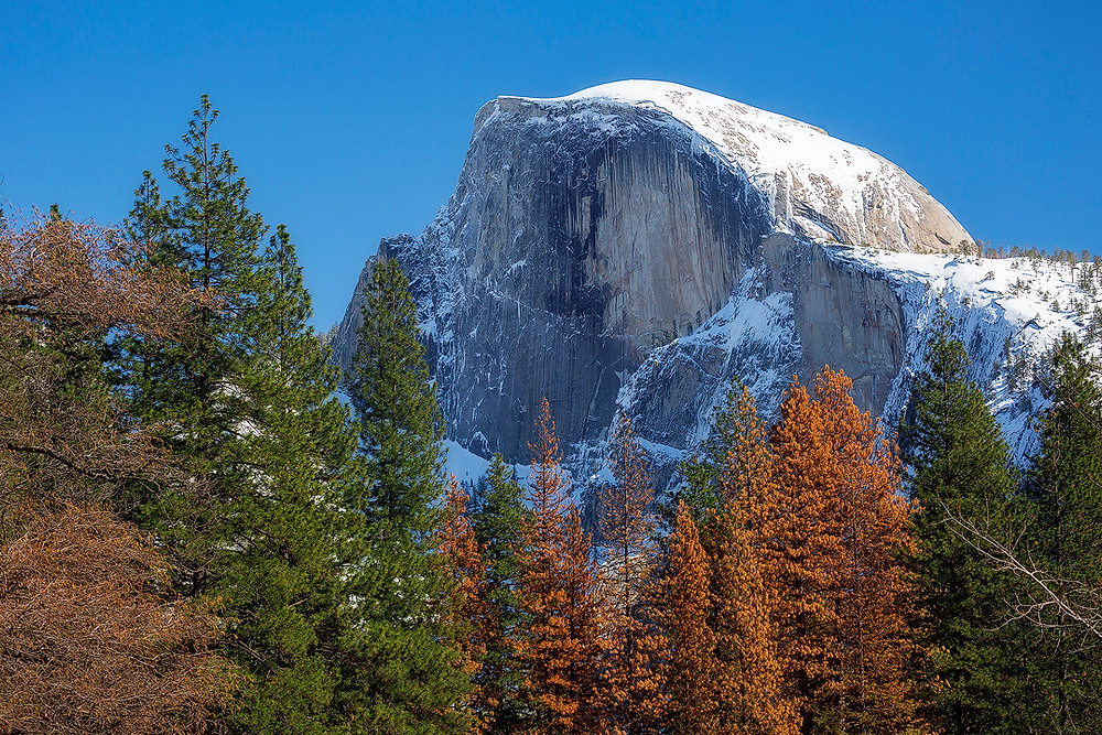 Half Dome stands covered in snow under a bright blue sky. Photographed by Chase Dekker.