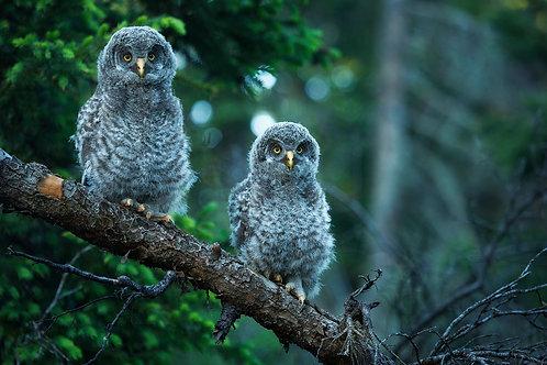 Gray Twins