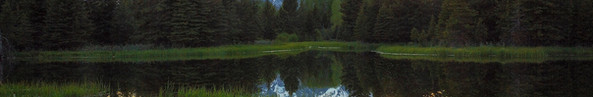 Blissful Reflection