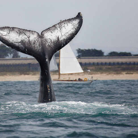 Best Whale Watching Spots Across the Globe