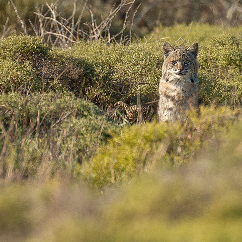 Tales from the Field: A Day and a Half at Point Reyes
