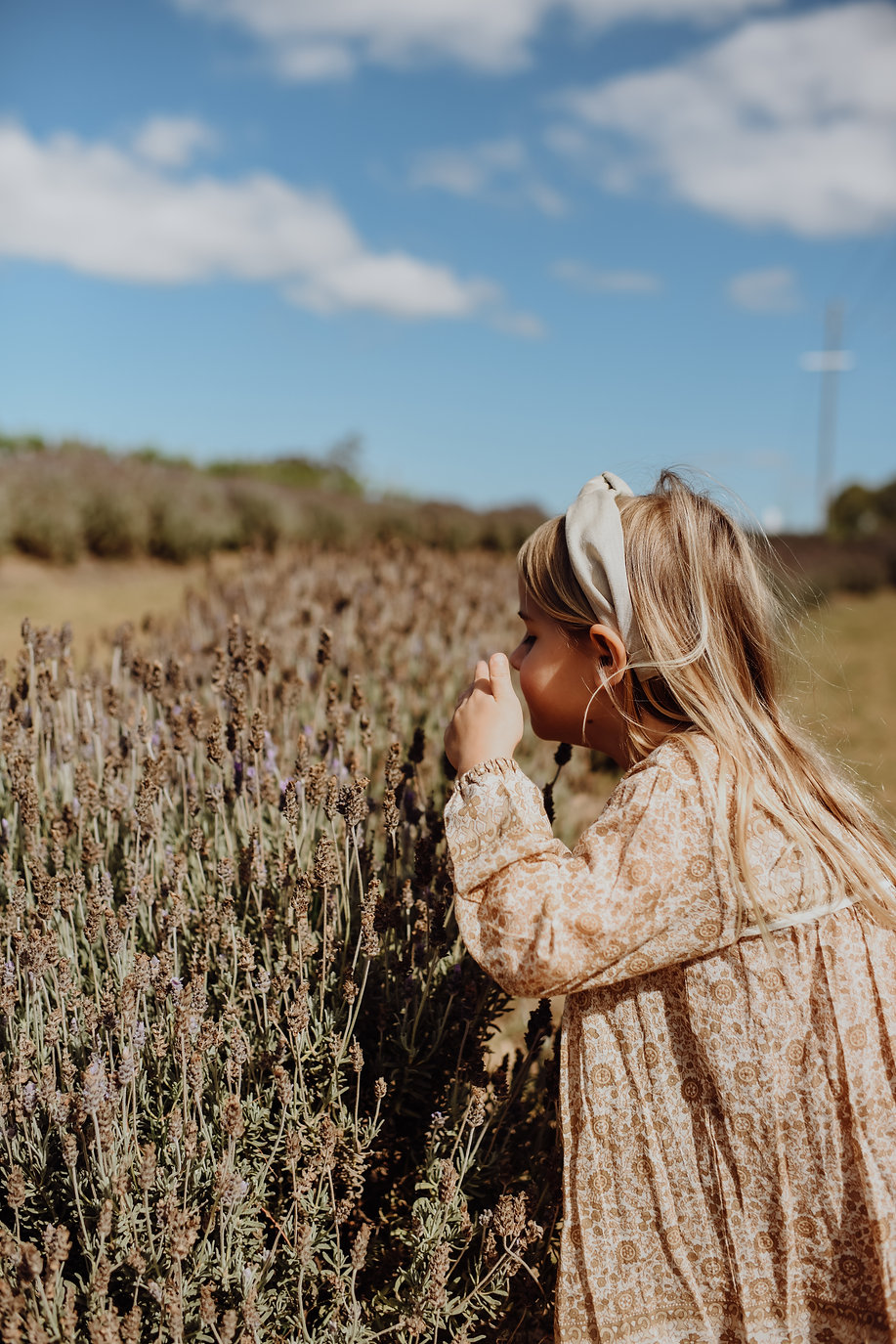 Alix Duyn Photography Lavendar-1.jpg